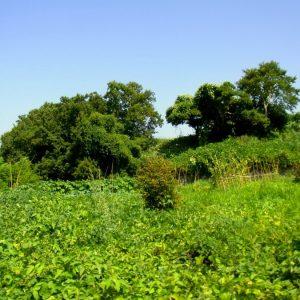 自然農:フク木農園